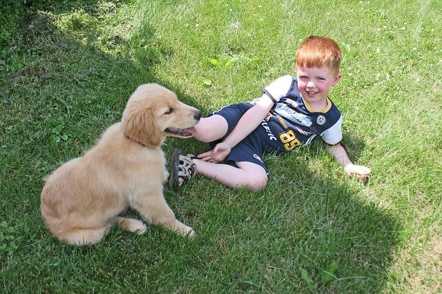 puppy-2197326_640